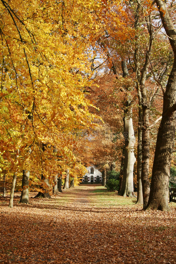 House in the woods with autumn royalty free stock images