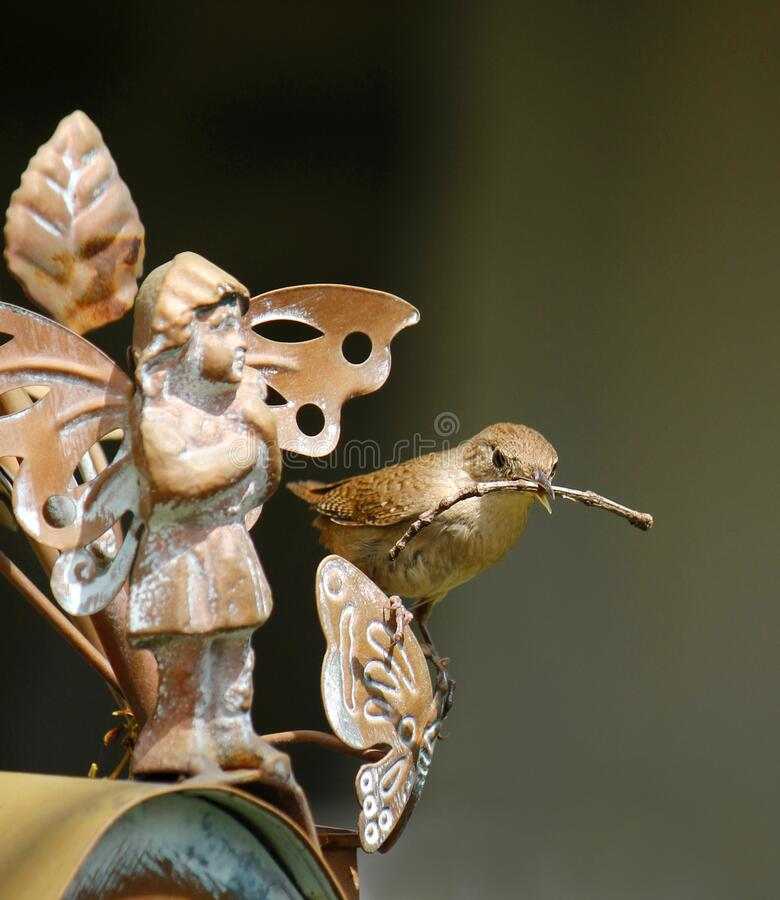 Free House Wren With Stick By Garden Fairy Royalty Free Stock Photography - 183193657