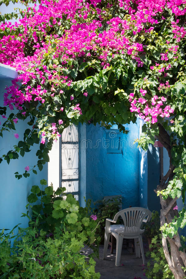 House yard garden in Greece. Small yard in greek village with bougainvillea flowers and typical blue walls royalty free stock photography