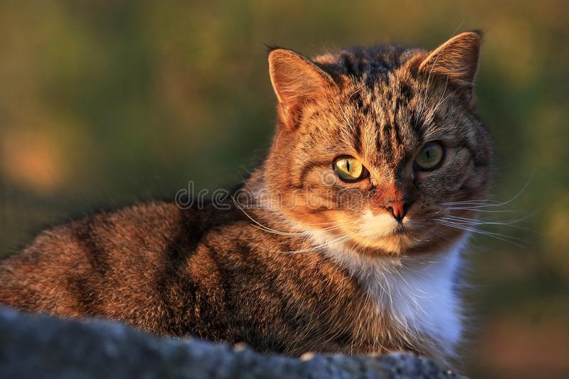 Housecat. Domestic cat to bask in stone stock photos