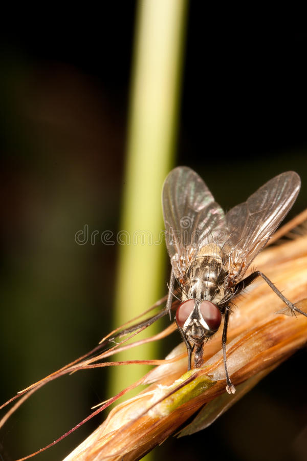 Download Housefly stock image. Image of detail, insect, yellow - 15234219