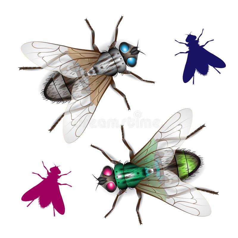 housefly vektor illustrationer