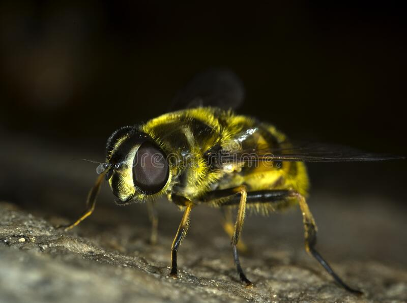 Housefly close up stock images