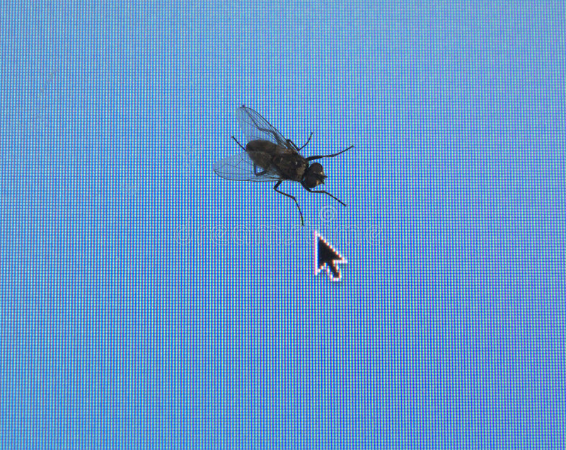 Housefly on computer screen. stock photography