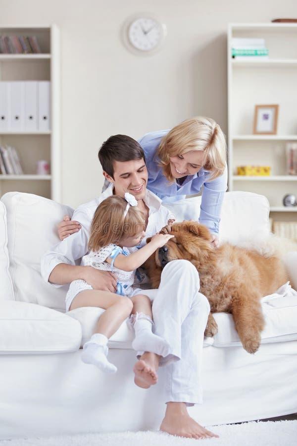 Household pet stock image