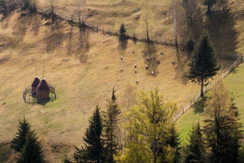 Household sheep fence mountain Romania royalty free stock photo