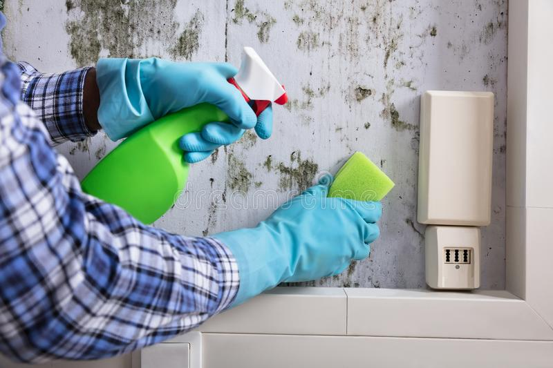 Hand With Glove Cleaning Mold From Wall stock photo