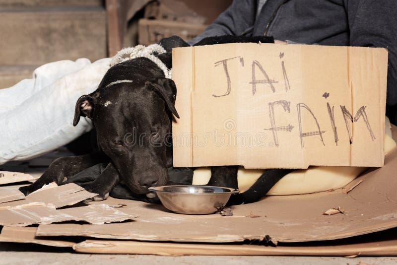 Houseless Hund und es sind Eigentümer auf dem Stadtbürgersteig stockfoto