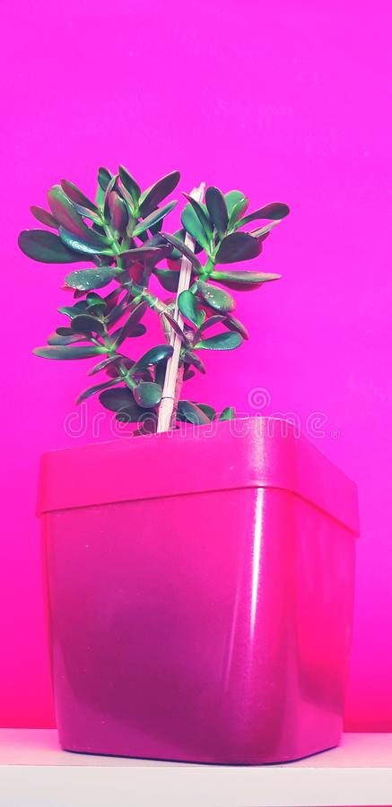 houseplant fotografia stock