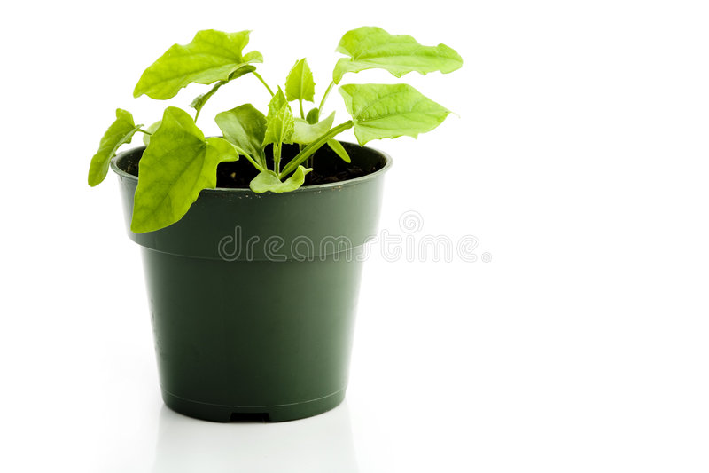 Download Houseplant stock image. Image of greens, foliage, growing - 3024441