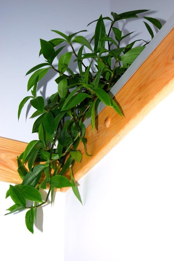 Houseplant fotografia stock