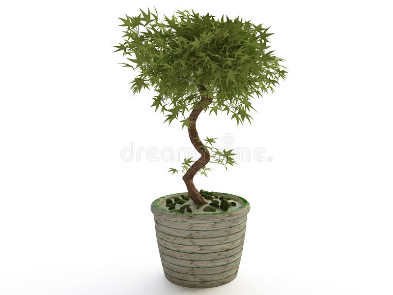 houseplant bonsai baum im keramischen blumen topf stock abbildung bild 50827418. Black Bedroom Furniture Sets. Home Design Ideas