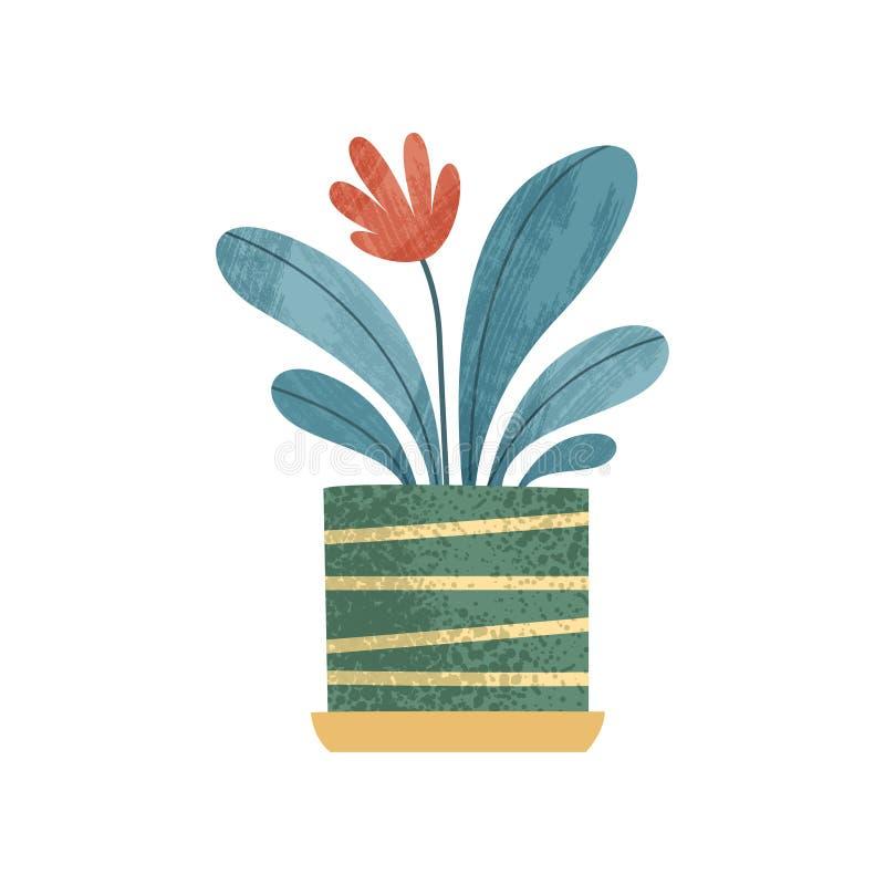 Houseplant decorativo floreciente, hogar elegante o ejemplo del vector de la decoración de la oficina en un fondo blanco stock de ilustración