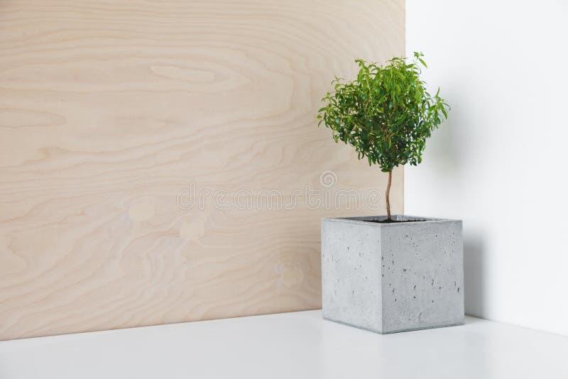 Houseplant em um potenciômetro minimalista do concreto fotos de stock