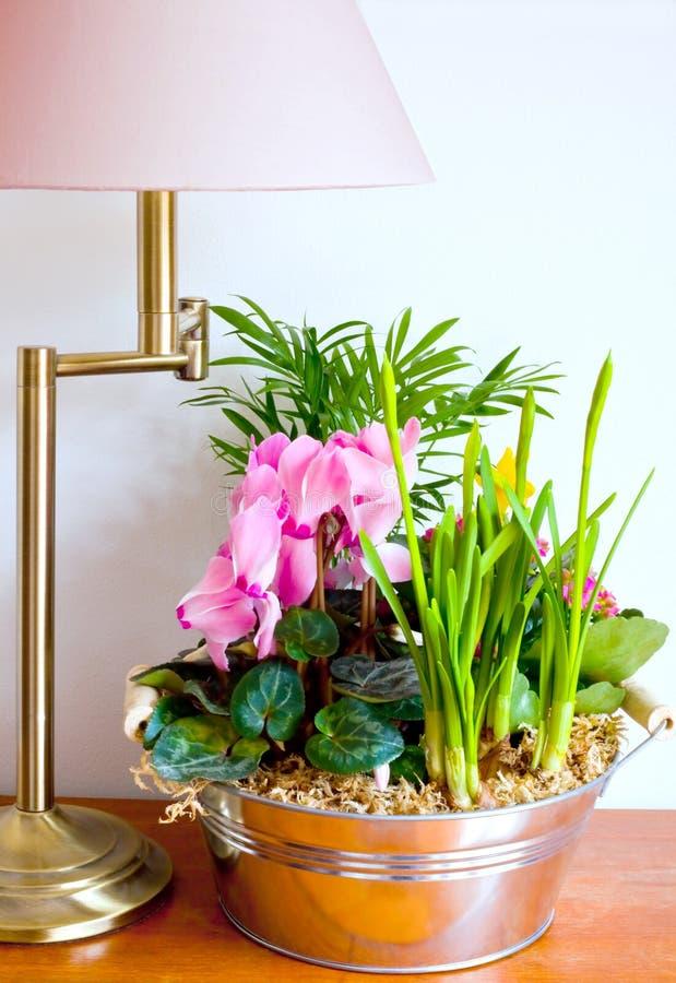 Lamp en houseplant royalty-vrije stock foto