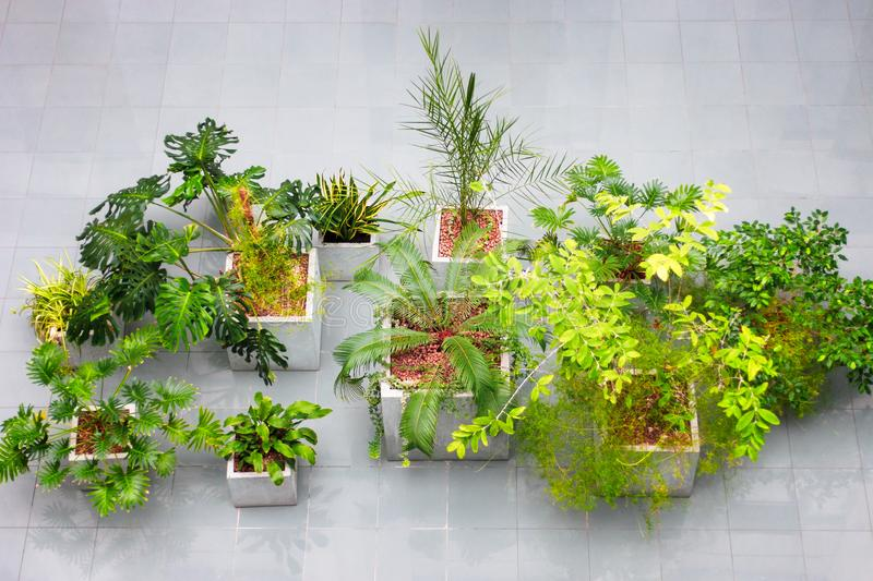 Houseplant interior design. evergreen plants top view at business building. idea for decorating indoors with tropical plants. royalty free stock photos