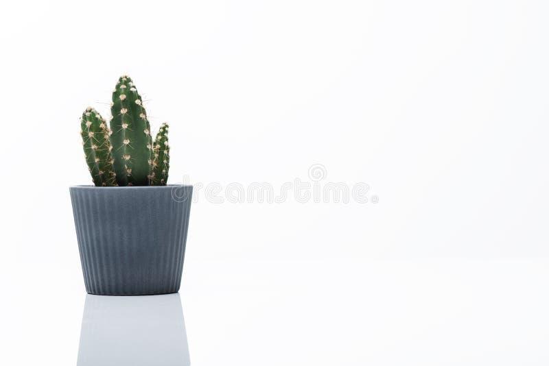 Houseplant ist auf weißem Schreibtisch stockbild