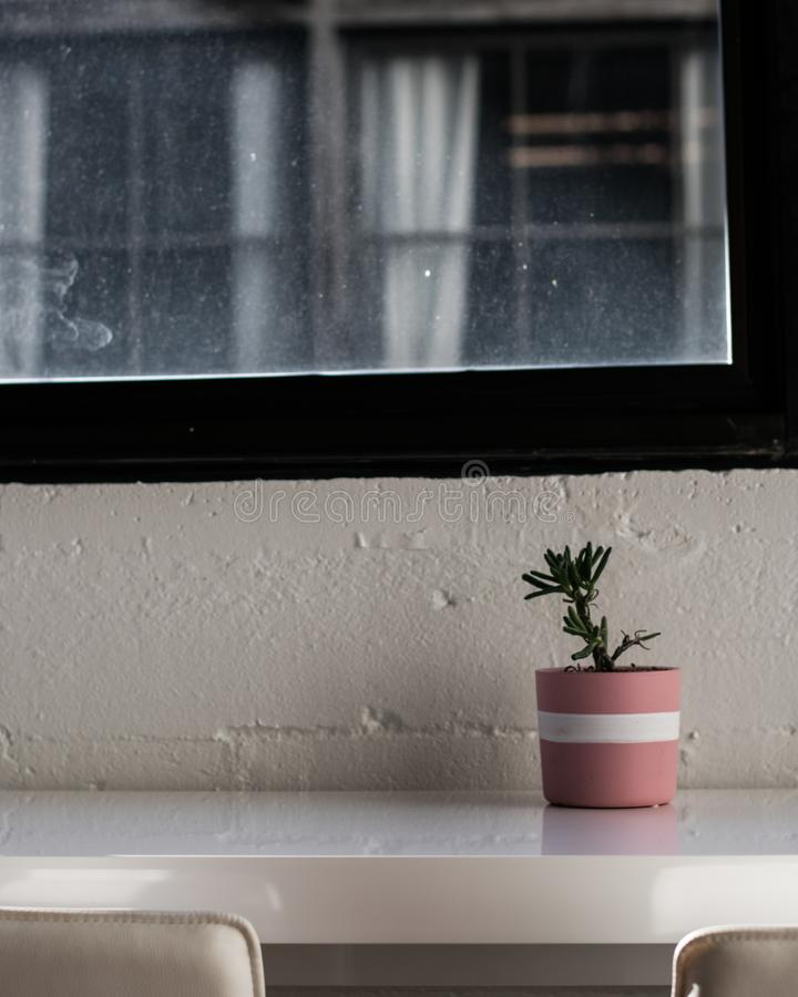 Houseplant na stole obraz stock