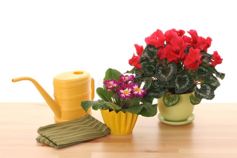 houseplants obrazy royalty free