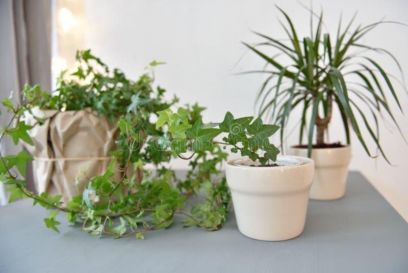houseplants obraz royalty free