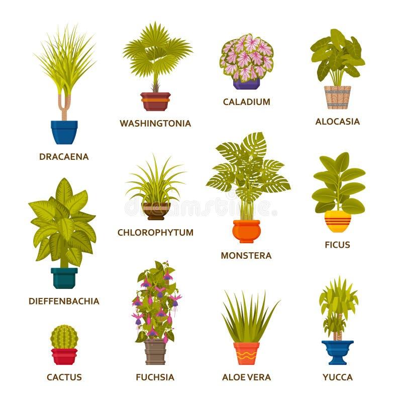 Houseplants decorativos en los potes fijados Palmeras interiores del florista y macetas interiores stock de ilustración