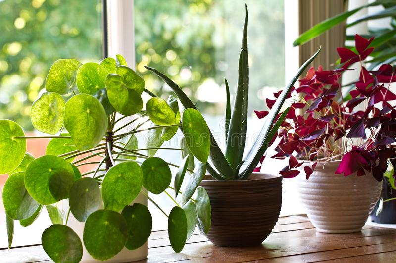 Houseplants display. Various house plants or indoor plants royalty free stock photography