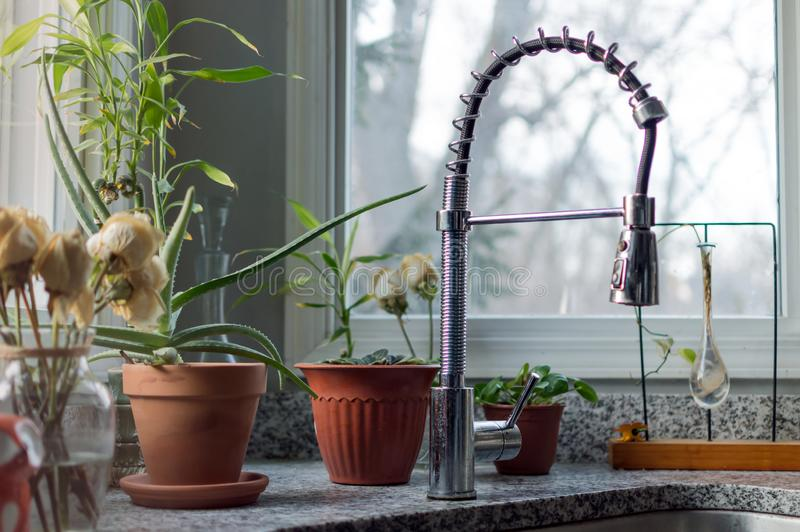 Houseplants durch Spülbeckenfenster lizenzfreie stockbilder