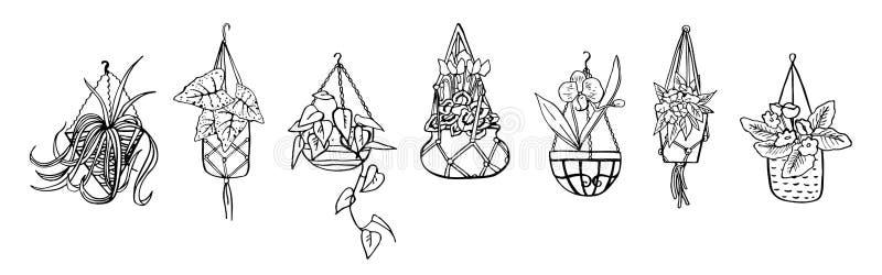 Houseplants i hängande blomkrukor Vektorhanden som dras för att skissera svartvitt, skissar illustrationen vektor illustrationer