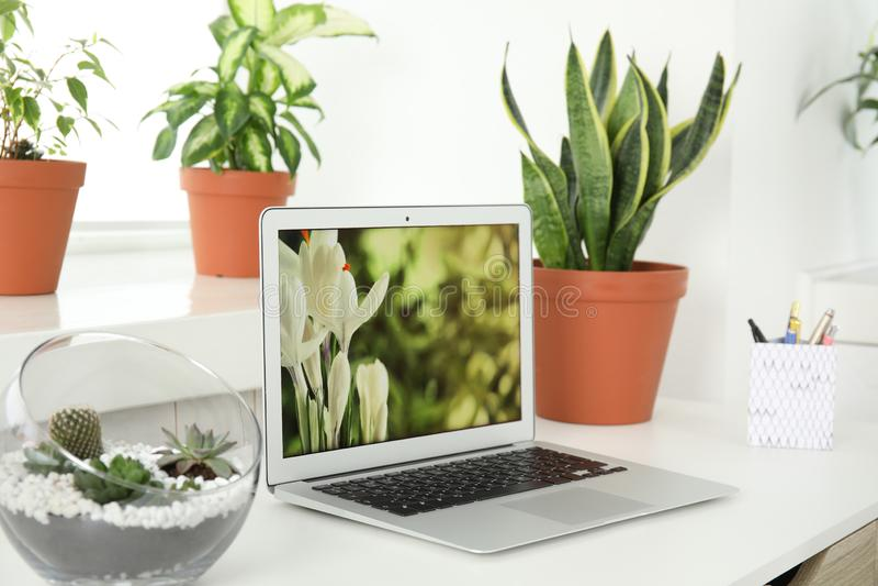 Houseplants i laptop na stole obraz stock