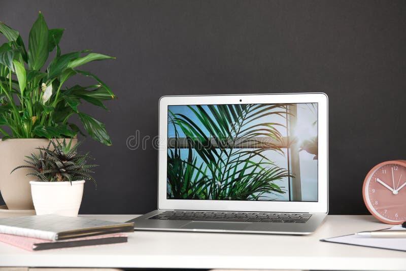 Houseplants i laptop na stole zdjęcia stock
