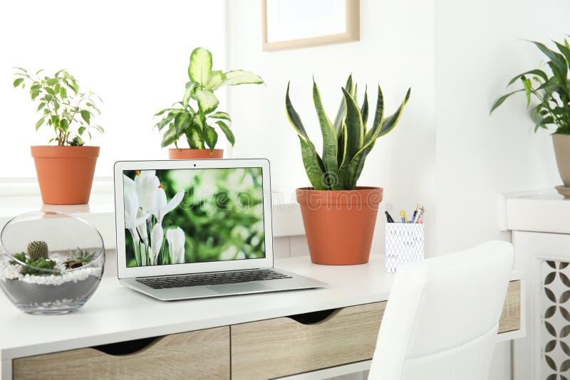 Houseplants i laptop na stole obraz royalty free