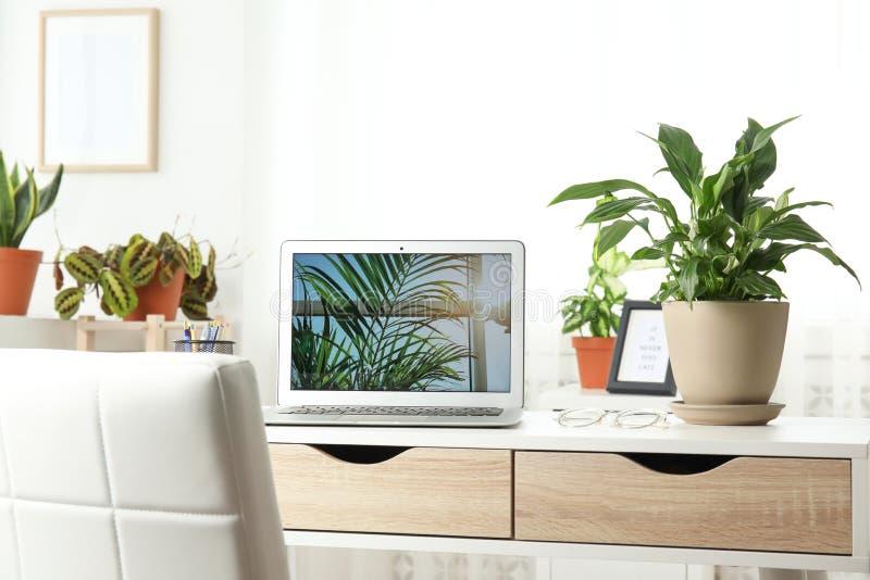 Houseplants i laptop na stole obrazy stock