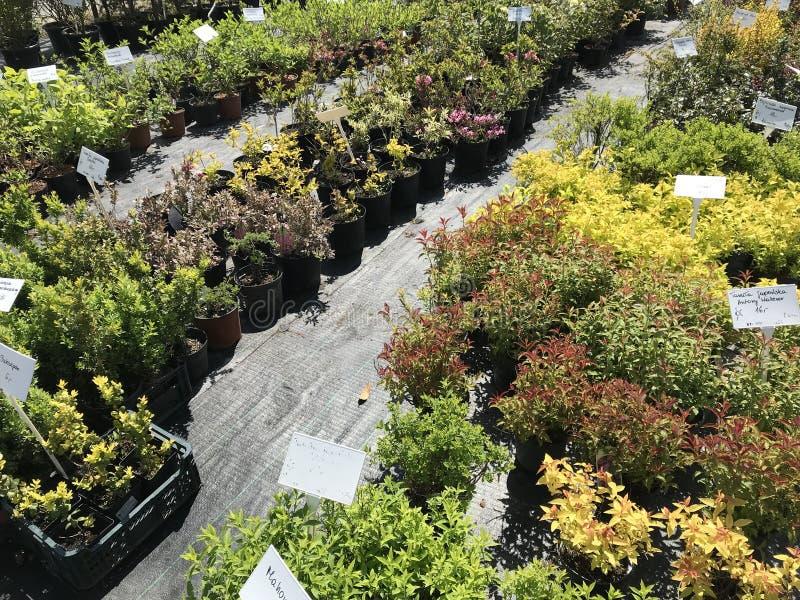 Houseplants i ogrodowych rośliien plenerowy sprzedawca fotografia stock