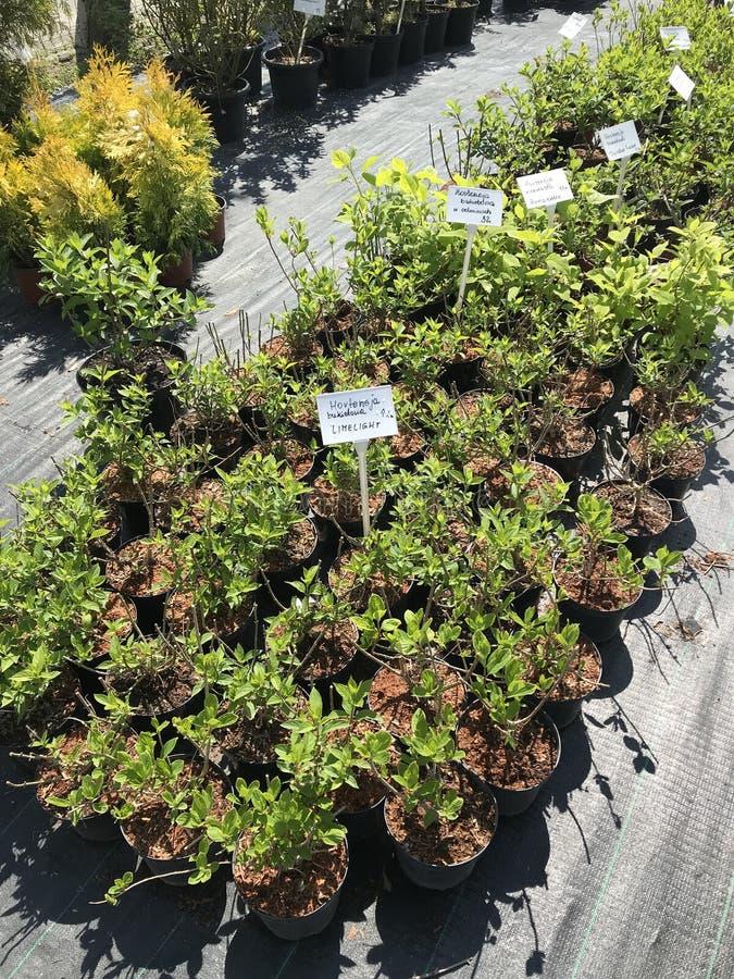Houseplants i ogrodowych ro?liien plenerowy sprzedawca obraz stock