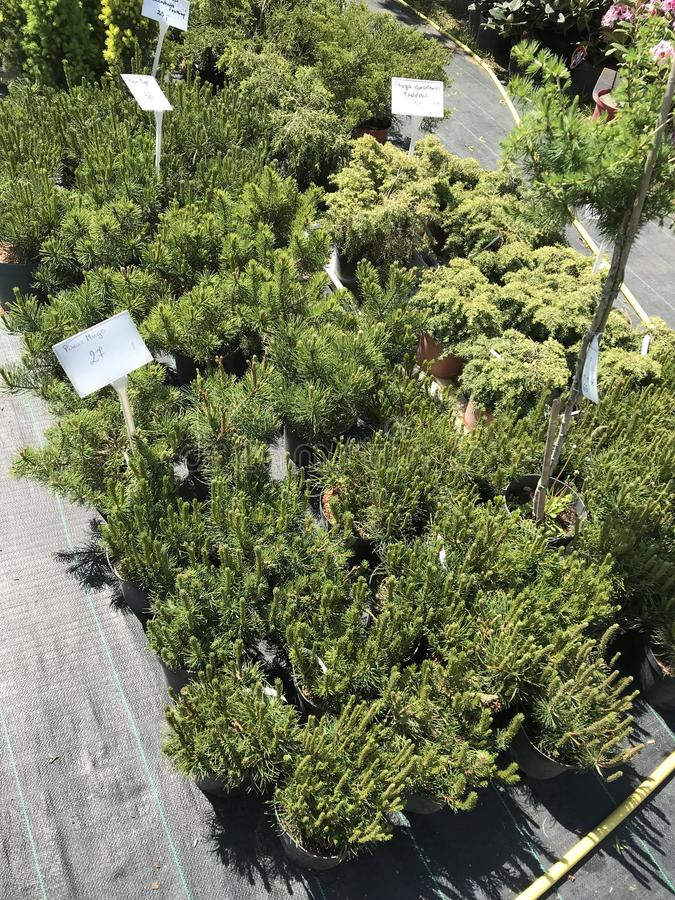 Houseplants i ogrodowych ro?liien plenerowy sprzedawca obrazy stock