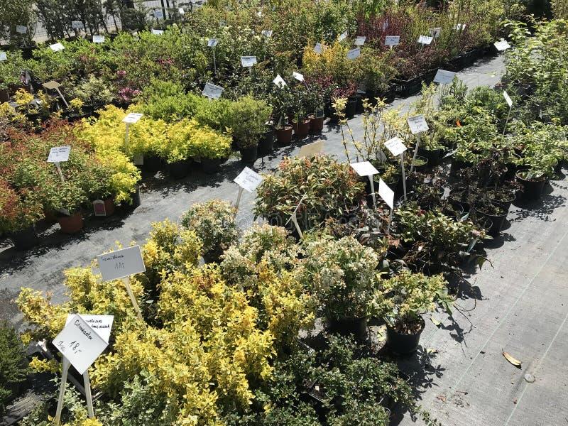 Houseplants i ogrodowych ro?liien plenerowy sprzedawca obrazy royalty free