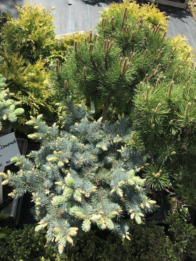Houseplants i ogrodowych ro?liien plenerowy sprzedawca fotografia stock