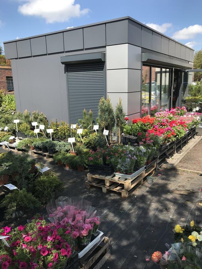Houseplants i ogrodowych ro?liien plenerowy sprzedawca zdjęcie stock