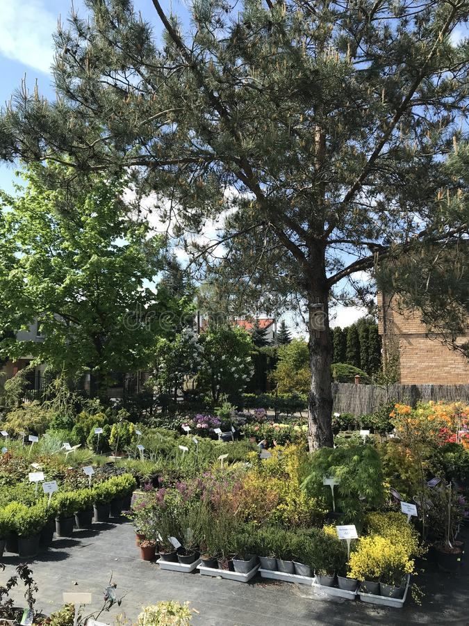 Houseplants i ogrodowych ro?liien plenerowy sprzedawca zdjęcie royalty free