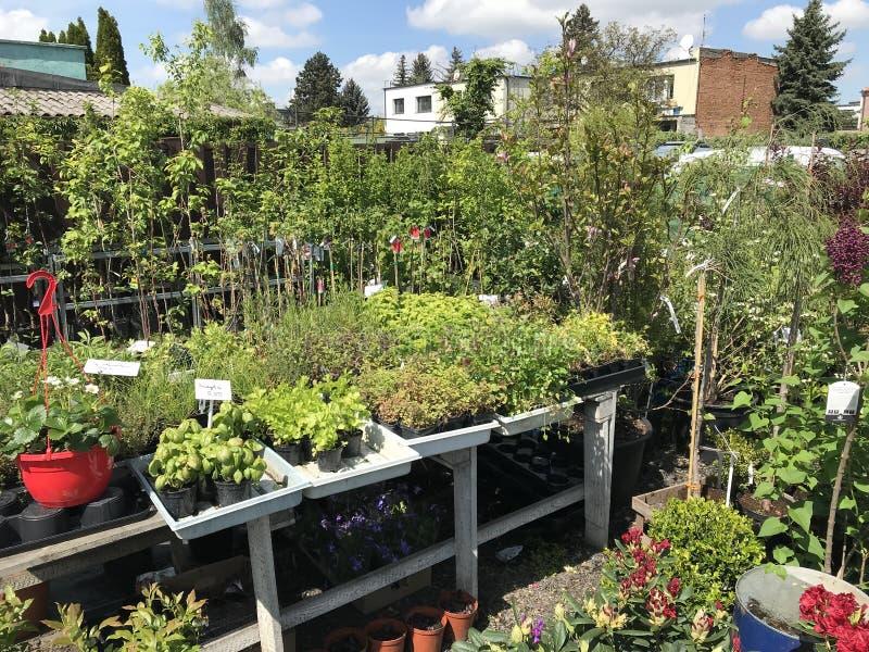 Houseplants i ogrodowych ro?liien plenerowy sprzedawca zdjęcia royalty free