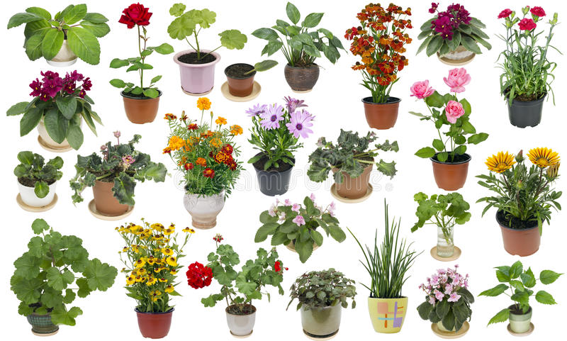 Attrayant Download Houseplants And Indoor Flowers Set Stock Photo   Image Of Plastic,  Collection: 70980728