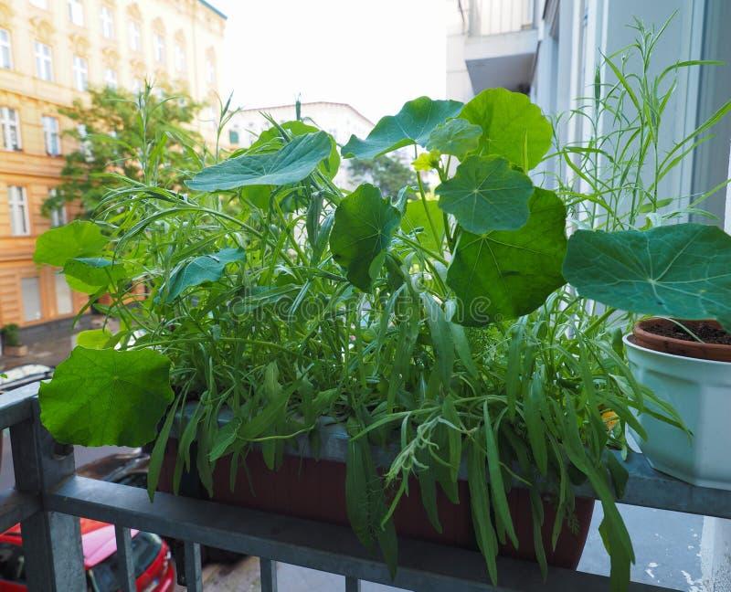 houseplants na balkonie obraz royalty free