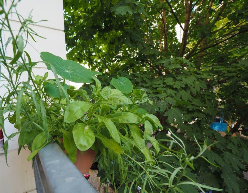 houseplants na balkonie fotografia royalty free