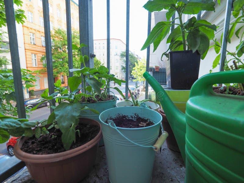 houseplants na balkonie fotografia stock