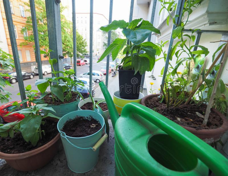 houseplants na balkonie obrazy royalty free