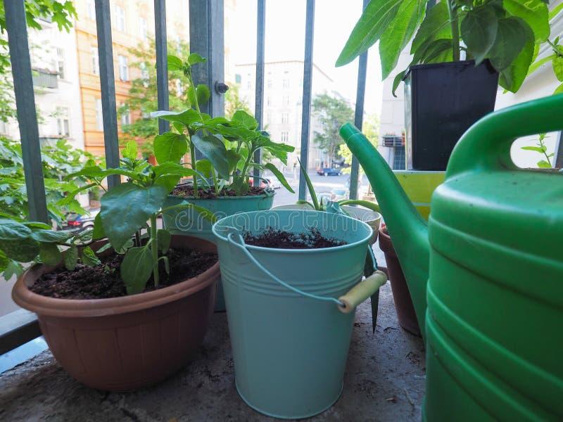 houseplants na balkonie zdjęcie stock