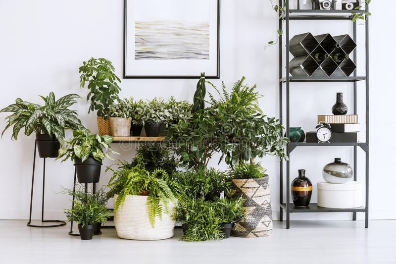 Houseplants and shelf. Houseplants on the floor and table standing next to a metal shelf with decorations in living room interior stock image
