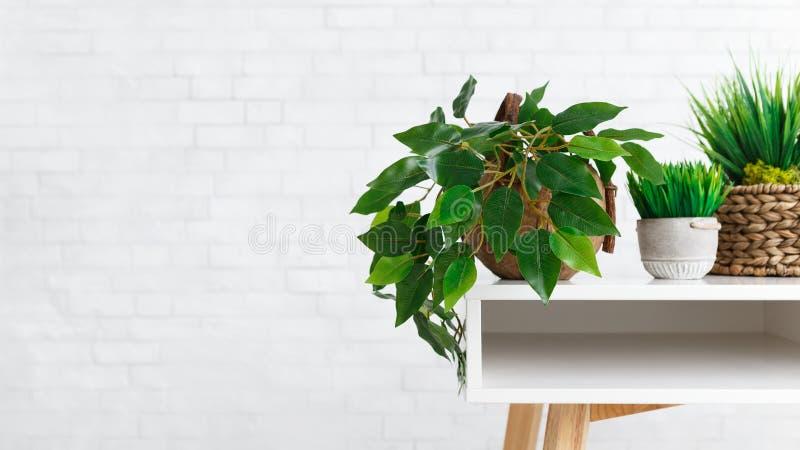 Houseplants w różnych garnkach na stole nad biel ścianą fotografia stock