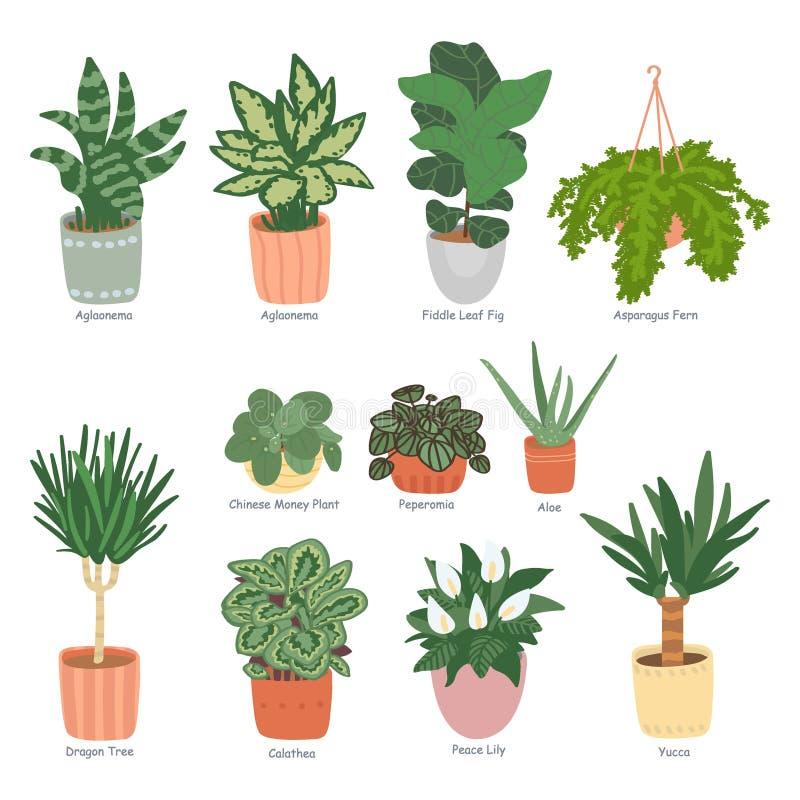 Houseplantsinzameling op witte achtergrond wordt geïsoleerd die De tuin van het huis Vectorillustratie in van hand-drawn vlakte