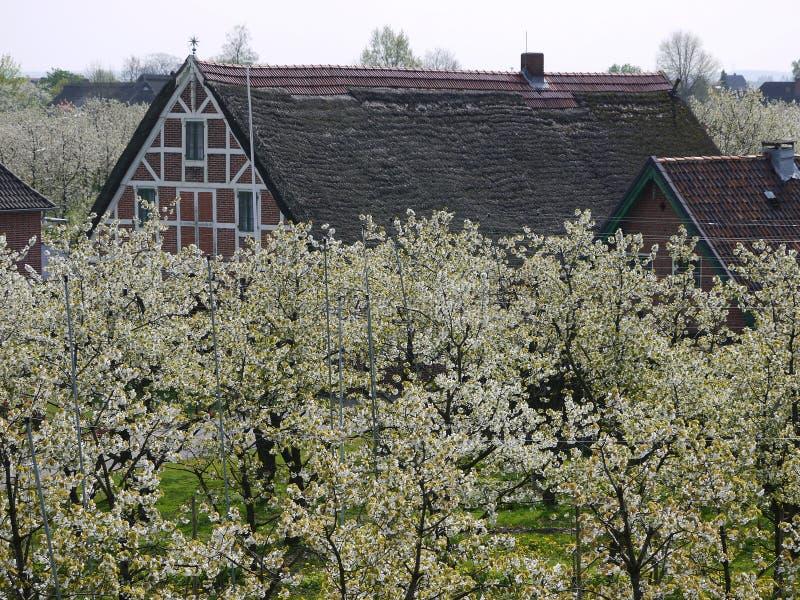 Houseroofs in een aanplanting van de kersen bloeiende die boom, aan metaalpolen wordt gebonden aan draad worden verbonden, vertro stock afbeeldingen